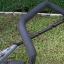 """รถตัดหญ้า 4 ล้อเข็น """"PATCO"""" #PATCO19AL โครงอลูมิเนียม จานกลม 4 ใบมีด (lawn mover body aluminium) thumbnail 3"""